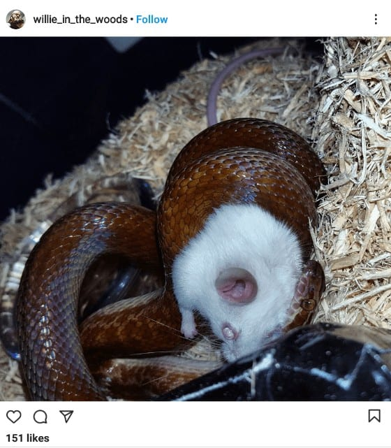 Complete Care Guide to African House Snakes 2